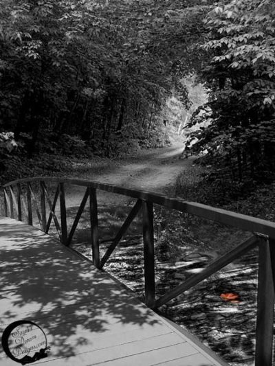 Black and white photo of a bridge over water, headed in to a clearing in the trees. The water has a brightly colored leaf floating